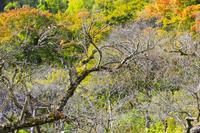 百草園 - フォトサークル      「森羅の会」