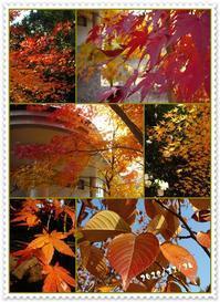 今年の秋は・・・ -  ご機嫌いかが Ⅱ