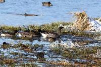 雪の長都沼 - 今日の鳥さんⅡ