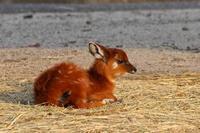 東武動物公園の動物たち~蹄な方々 - 続々・動物園ありマス。