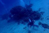 18.11.24ビーチでカメラ女子会 - 沖縄本島 島んちゅガイドの『ダイビング日誌』