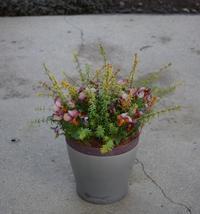 ビオラ・ビッツハートカクテルの寄せ植え - ヒバリのつぶやき