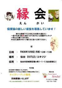 縁会のご案内 - ☆保護猫*ときどき*うち猫☆