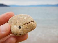 スナメリ石 - Beachcomber's Logbook