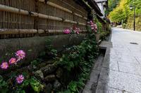 初秋の鳥居本 - 花景色-K.W.C. PhotoBlog