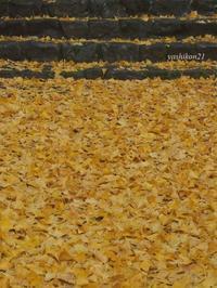 鳥見山公園Torimiyama Park - 花鳥風猫ワン