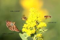 秋コラボ (5) - 野山の住認たちⅡ