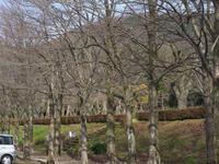 #1335樹木公園 - 想い出cameraパートⅢ