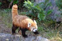 野毛山動物園1 - 動物園に嵌り中