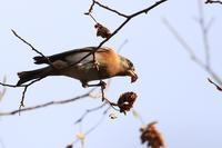 富士山麓の鳥たち・3♪ - happy-cafe*vol.2