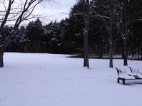 初雪。 - ヒロムシ君のお散歩日記