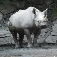 今日は機嫌がよくて表情すっきりのアルゴ@上野 2018.11.20 - ごきげんよう 犀たち