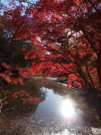 千葉市 泉自然公園の紅葉 (2018/11/23) - わが愛しのXXX。