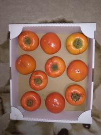 干し(あんぽ)柿、又作ってみました - 一二の日記