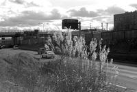高速道路わきのススキ - 照片画廊