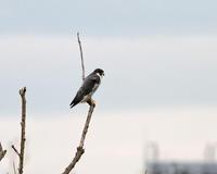 おもしろい風景!! - 季節の鳥達