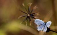 今年一番の冷え込み - 紀州里山の蝶たち