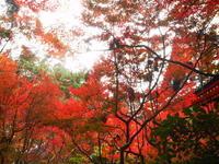 京都市 毘沙門堂、双林院、琵琶湖疏水の紅葉 2018 - 転勤日記