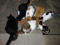 ネコ - ネコと裏山日記