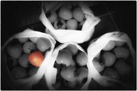 渋柿、120個買う - コバチャンのBLOG