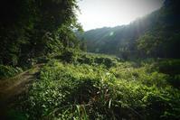 台湾・南投縣本部渓の景色 - TOM'S Photo