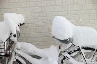 雪、でした - へたぴ~光画館