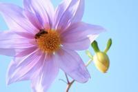2018.11 神代植物公園活動して休むハチ - ゆらりっぷ -yurari's trip-