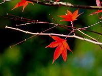 紅葉シーズンには出遅れたけれどその3 - 自然がいっぱい3
