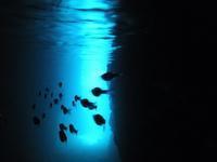 青の洞窟♪ - 沖縄ダイビング&フィッシング DSA ブログ