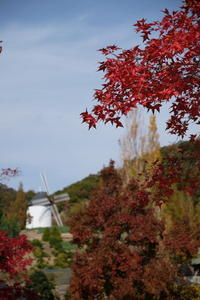 タイワンフウの木-あすたむらんど徳島- - ブナの写真日記