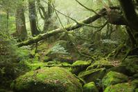 『virtualtrip屋久島part2永遠の森』感想 - いつでも、ひなたぼっこ