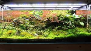 120センチ水槽 最後の姿 - 癒しのアクアライフ
