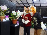 ネコさんトラさん記念撮影&販売情報 - 手柄山温室植物園ブログ 『山の上から花だより』