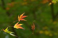 紅葉 - 高原に行きたい
