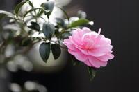 冬に咲く色 - ecocoro日和
