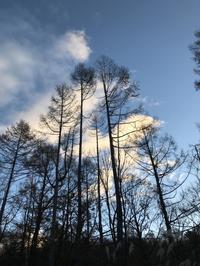 ジャンプリスとほんてんくん - 木洩れ日の森から