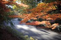 まゝに/11月の散策紅葉深まりゆく秋、去りゆく秋 - Maruの/ まゝに