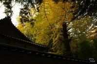 天理市黄葉 - ぶらり記録:2 奈良・大阪・・・