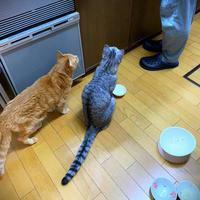 台所前でビシ - にゃんず日記