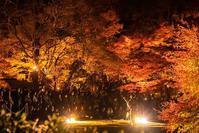 東山動植物園紅葉ライトアップ2018~演奏編~ - 愛知・名古屋を中心に活動する女性ギタリストせきともこのブログ