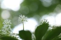 2018.11 六義園またまたなんの花シリーズの色々な撮り方① - ゆらりっぷ -yurari's trip-