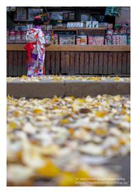 七五三 - ♉ mototaurus photography