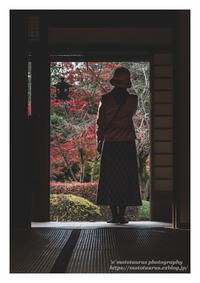 紅葉のきもち - ♉ mototaurus photography