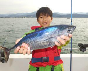サゴシ大漁 -