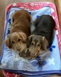 今日は骨粗鬆症検診に行ってきました。 - きょうのはなwithくるみ~愛犬写真日記~