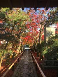 光悦寺の紅葉 - 京都西陣 小さな暮らし