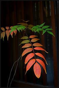 千住散歩-764 - Camellia-shige Gallery 2