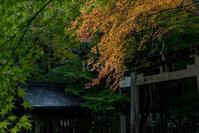 等彌神社 - toshi の ならはまほろば