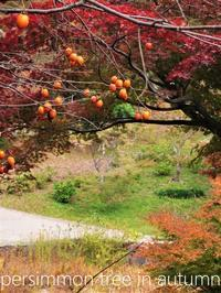 柿色の晩秋 - serendipity blog