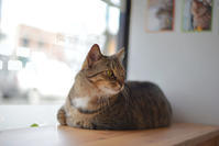 Meow Cat Cafe - ∞ infinity ∞